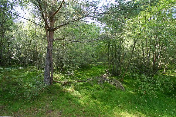 Spruce, 2 Woodlands,IV18 0LL extra photo 7